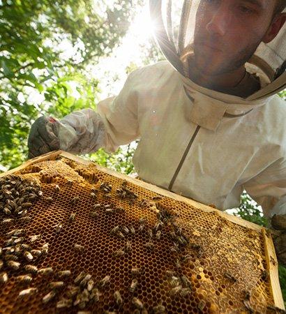 Australian manuka honey association