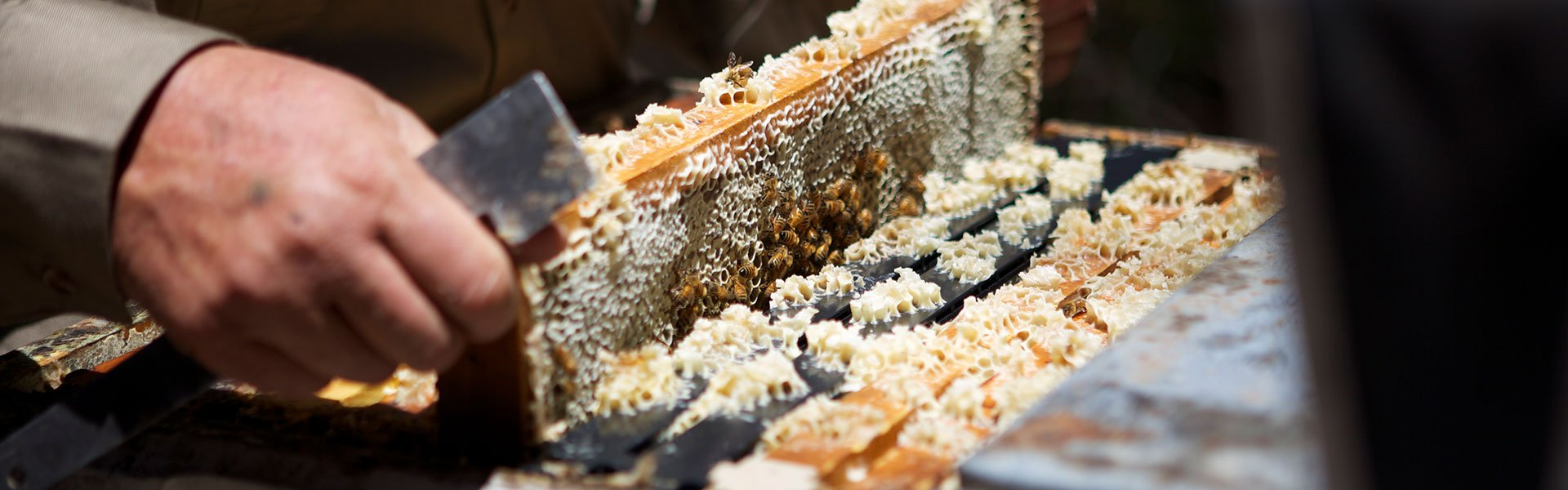 Australian Honey bee industry